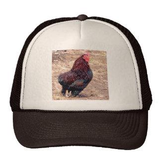 Xavier III Mesh Hats