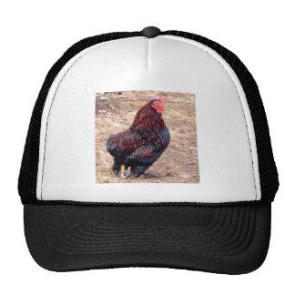 Xavier III Trucker Hat