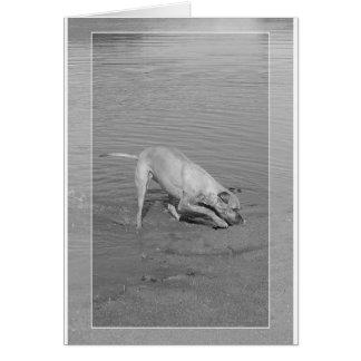 Xena in sand card (blank inside)