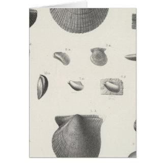XI Carboniferous Card