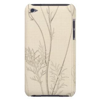 XII Leucampyx newberryi iPod Case-Mate Case
