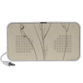 XII Leucampyx newberryi iPod Speaker