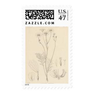 XII Leucampyx newberryi Postage