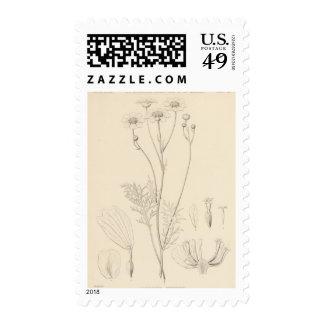 XII Leucampyx newberryi Stamps