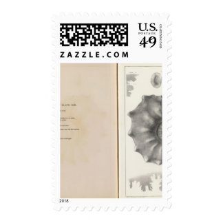 XIX Cretaceous Stamp