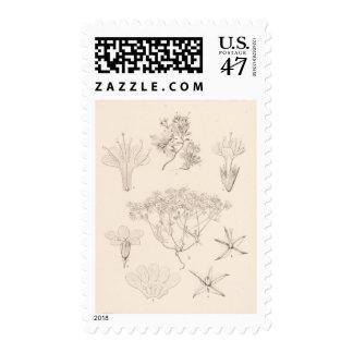 XIX Gilia Postage