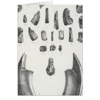XLI Ectoganus, Calamodon Greeting Card