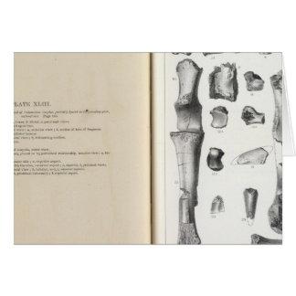 XLIII Calamodon simplex Greeting Card