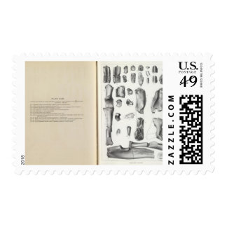 XLIII Calamodon simplex Stamps