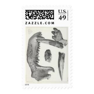 XLIX Coryphodon latidens Postage Stamp