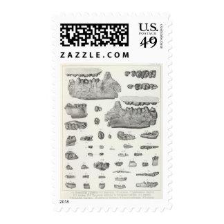 XLV Phenacodus, Opisthotomus, Hyopsodus Stamps