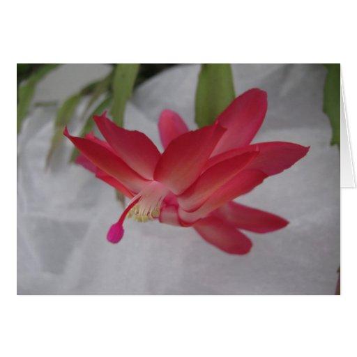 Xmas Cactus Flower Greeting Card