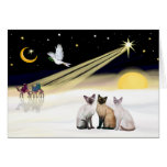 Xmas Dove / 3 Siamese cats Greeting Cards