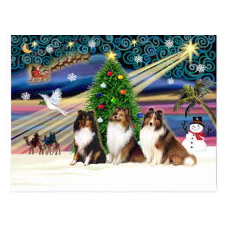 Xmas Magic-3Shelties 1TSri-2Sable Postcard