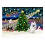 Xmas Magic-American Eskimo Dog Post Card