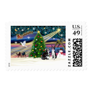 Xmas Magic-BostonTerrier Pair Postage