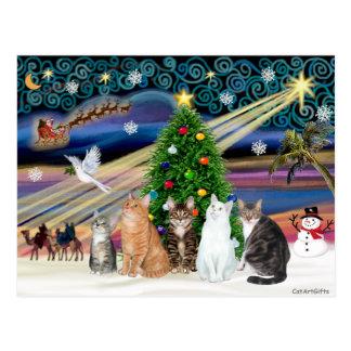 Xmas Magic - Five cats (AmSH) Postcard