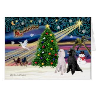 XMAS MAGIC-Poodle ST-Pair2 Card