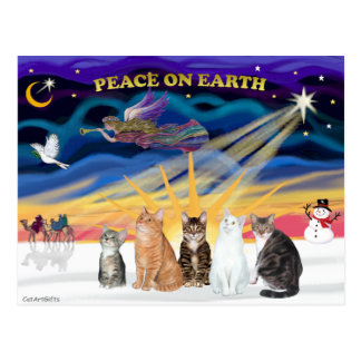 Xmas Sunrise - Five cats (AmSH) Postcard