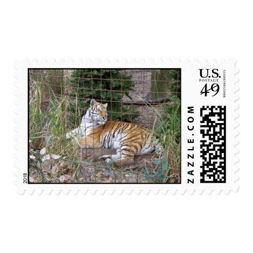 Xmas Tiger Postage Stamp