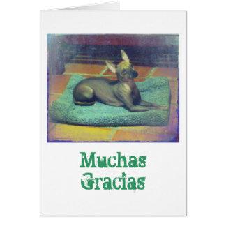 Xolo Note Card: Muchas Gracias Card