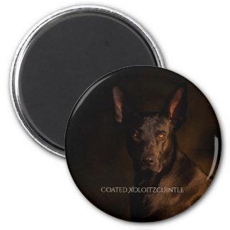 Xoloitzcuintle Coated Magnet