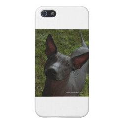 Case Savvy iPhone 5 Matte Finish Case with Xoloitzcuintli Phone Cases design