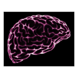 XRAY BRAIN SIDE VIEW PINK POSTER
