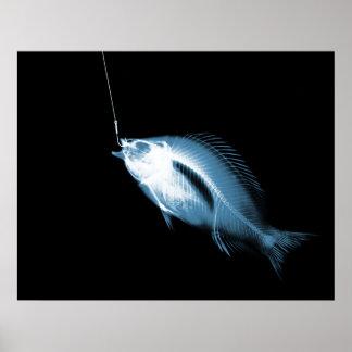 XRAY HOOK FISH BLACK BLUE POSTER