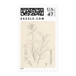 XVI Palmerella deblis Postage