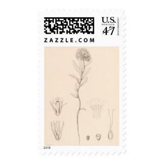 XVIII Nama rothrockii Postage