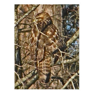 XX- Awesome Camoulflaged Hawk Postcard
