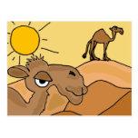 XX- Camel in the Desert Folk Art Post Cards