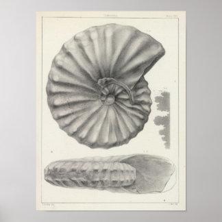 XX Cretaceous Print