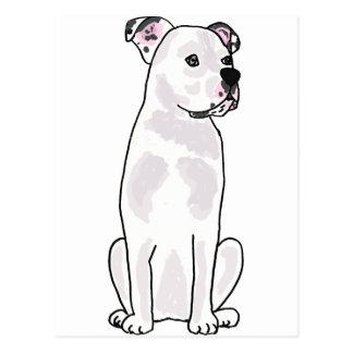 XX- Cute American Bulldog with Studded Collar Postcard