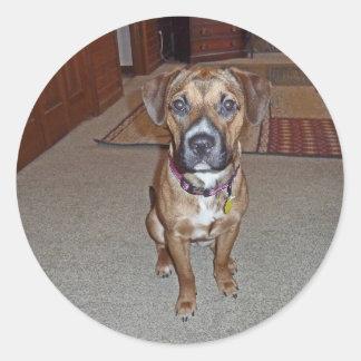 XX- Cute Boxer Mix Puppy Dog Classic Round Sticker