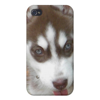 XX- Cute Siberian Husky Puppy Dog iPhone 4 Cases