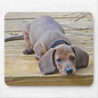 XX- Dachsund Puppy Dog Photography Mouse Pad