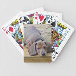 XX- Dachsund Puppy Dog Photography Poker Deck