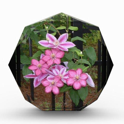 XX el Clematis rosado florece fotografía