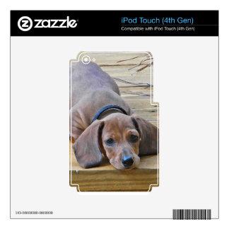 XX fotografía del perro de perrito del perro de pa iPod Touch 4G Calcomanías