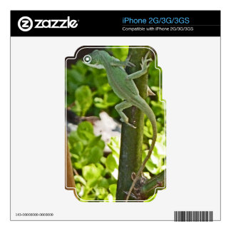 XX- Green Chameleon Lizard Photography iPhone 2G Skin