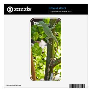 XX- Green Chameleon Lizard Photography iPhone 4 Decal