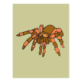 XX- Hilarious Tarantula Spider Postcards