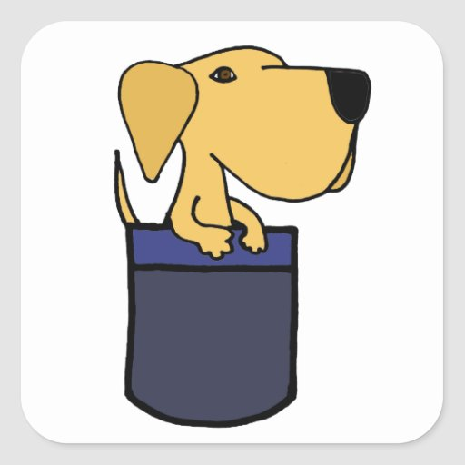XX perro amarillo de Labrador en un bolsillo Pegatinas Cuadradas