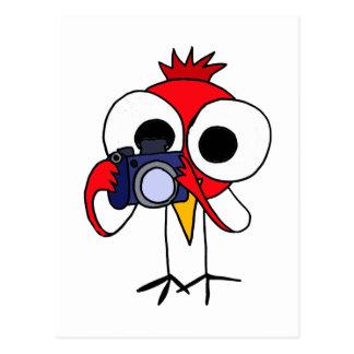 XX- Red Cardinal Bird with Camera Cartoon Postcard