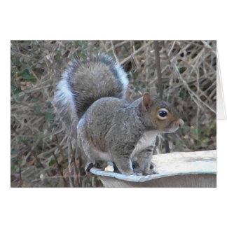 XX- Squirrel in a Birdbath Photography Card
