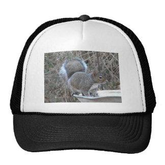 XX- Squirrel in a Birdbath Photography Trucker Hat