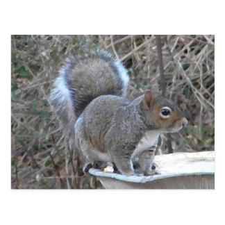 XX- Squirrel in a Birdbath Photography Postcard