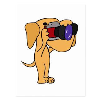 XX- Yellow Labrador Retriever Taking Photos Postcard